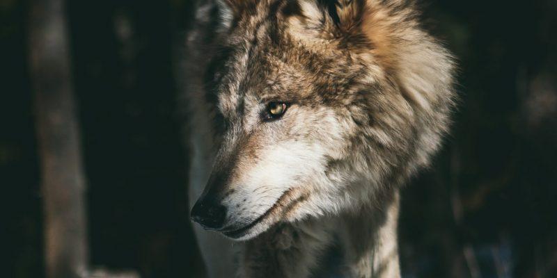 Clarissa Pinkola Estes: Biegnąca z wilkami